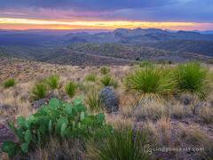 Cactus and Yucca Sunset print