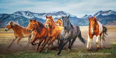 Horses of the Wet Mountain Valley print