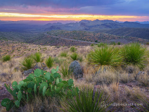 Cactus and yucca sit on the hilltop at Soltol Vista with Ross Maxwell Scenic drive leading across the mesa. A colorful sunset lights clearing storm clouds.