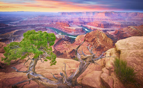 The Colorado river winds through the steep walled red rock canyons in this early dawn image. A juniper tree sits in the foreground on a perch on the cliff.