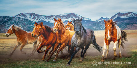 Horses of the Wet Mountain Valley