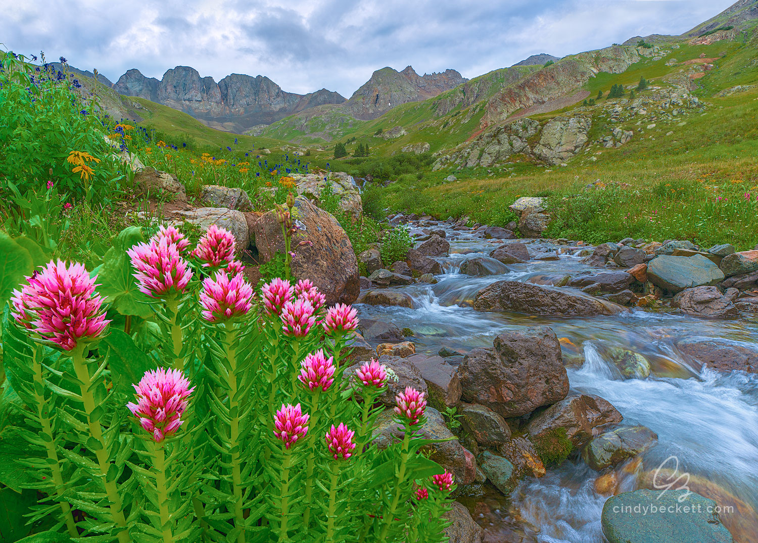 Queen's Crown (Rhodiola rhodantha) grows along a rocky stream in this high alpine meadow  beneath the vertical cliff faces of...